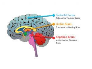brain reptile
